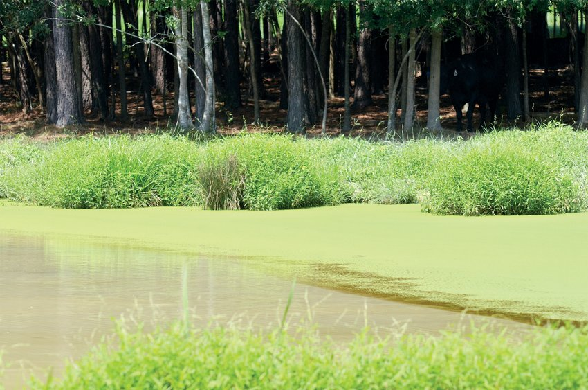 Green algae blooms are being seen in ponds and other bodies of water in North Carolina. It's not possible to see and distinguish the toxic algae from non-toxic algae with the naked eye.