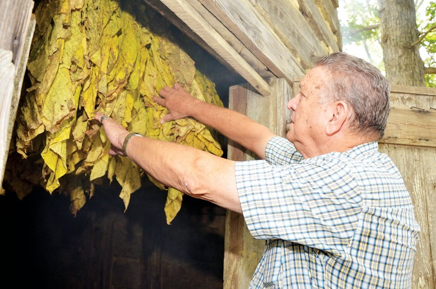 Johnny Johnson checks the flue-curing on the tobacco hanging in the tobacco barn Monday morning. The sticks of tobacco are showing life as it was in the past, as part of the 'Old Fashioned Days' in Silk Hope. Tobacco was one of the top agricultural crops in North Carolina for decades.