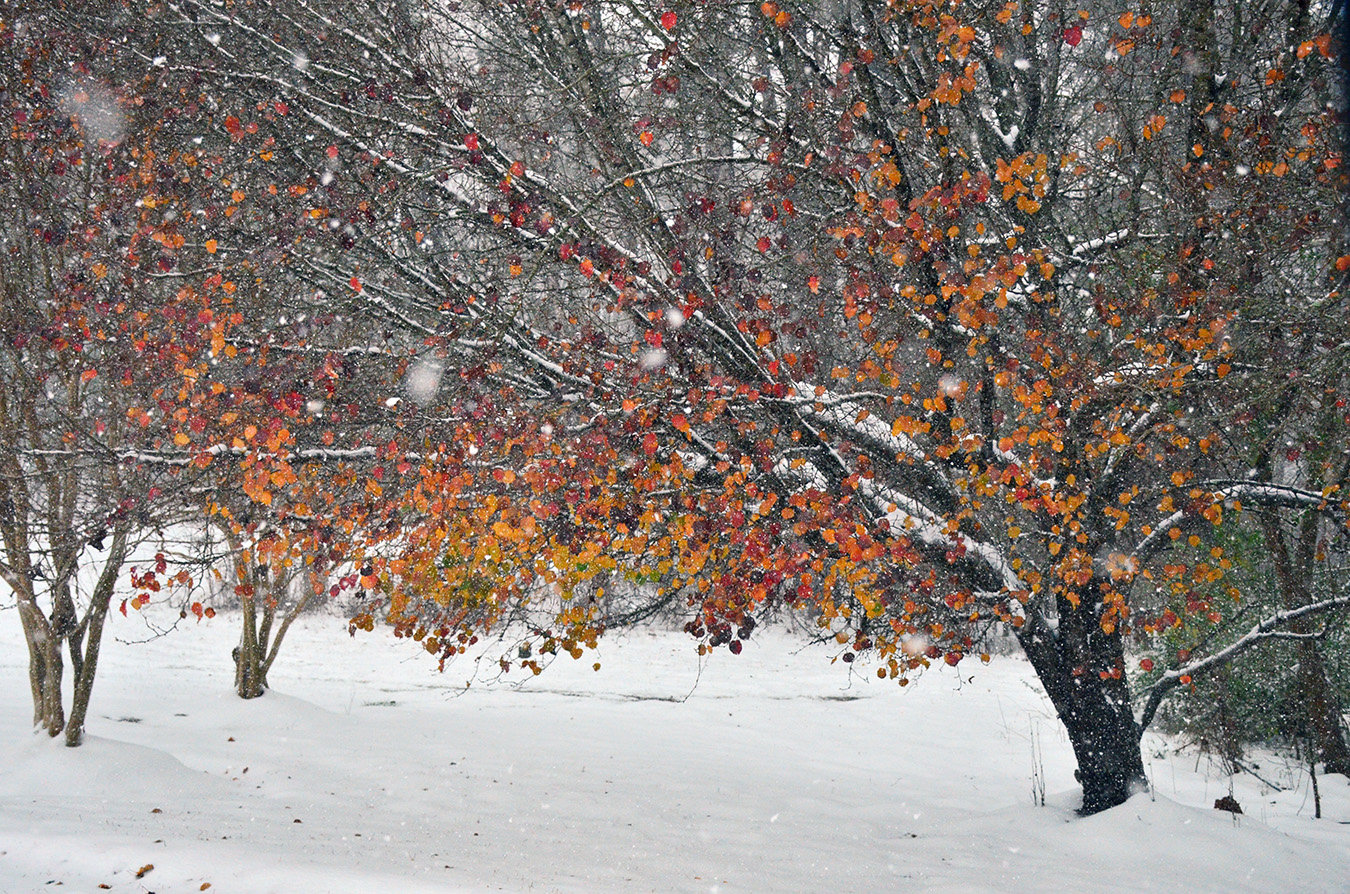 A little color adds to the snowfall on Monday.