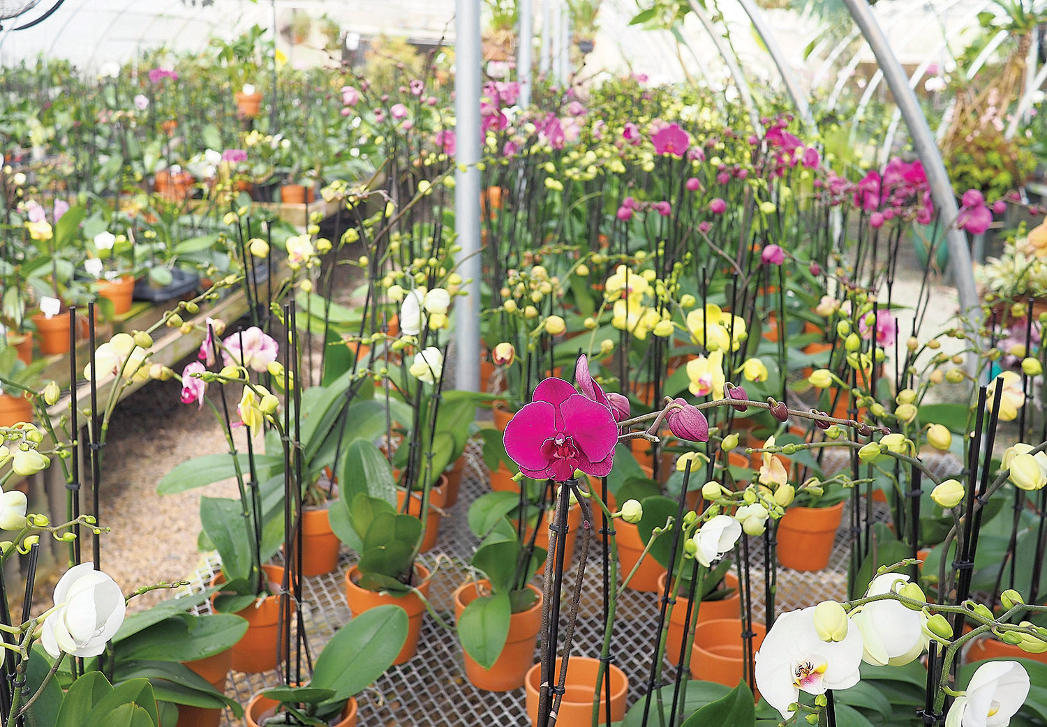 A sampling of orchids from the Orchid Gallery.
