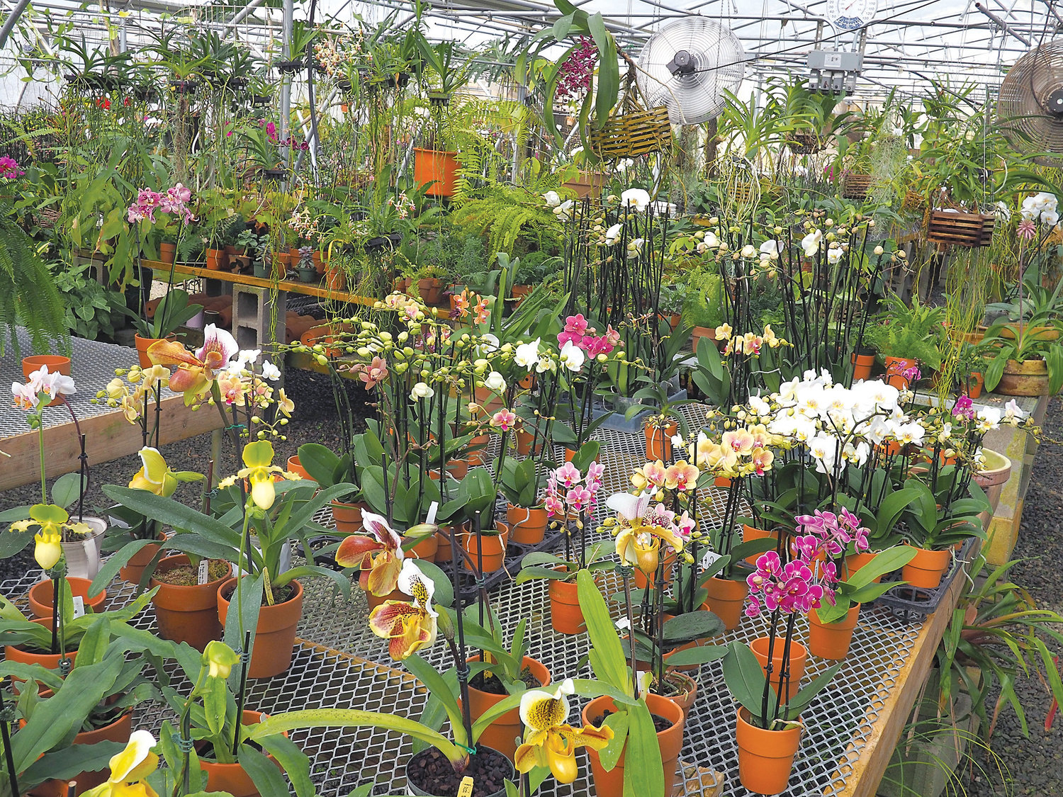 The Orchid Gallery carries a variety of orchids which fill the greenhouse with vibrant colors and delicate fragrances.