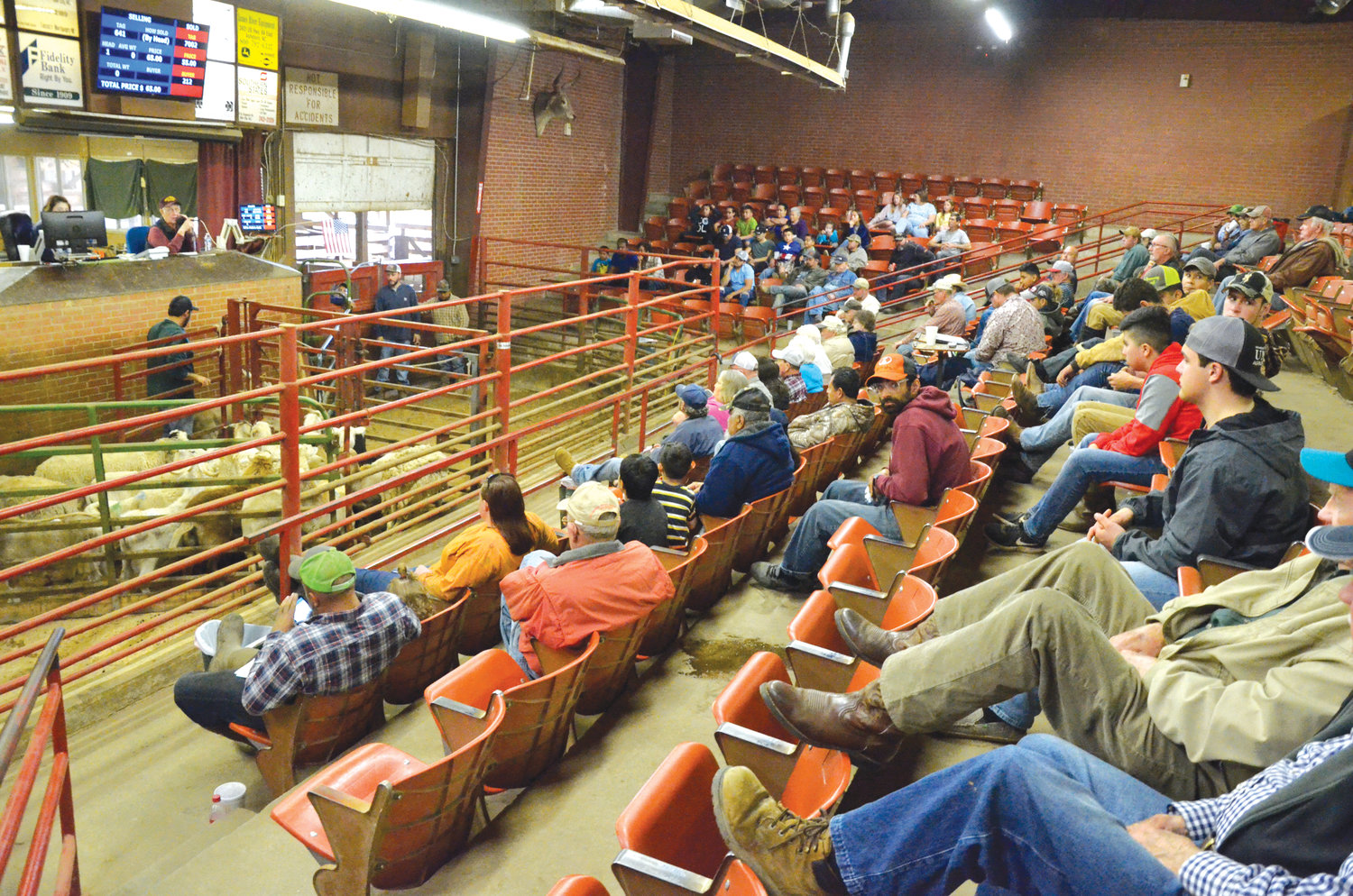 A good crowd is on hand Friday to watch and bid on the livestock going through the pens at the Carolina Stockyard. A tote board above auctioneer Kenneth Green and clerk Meghan Teague keeps track of the animals being sold, and their price.