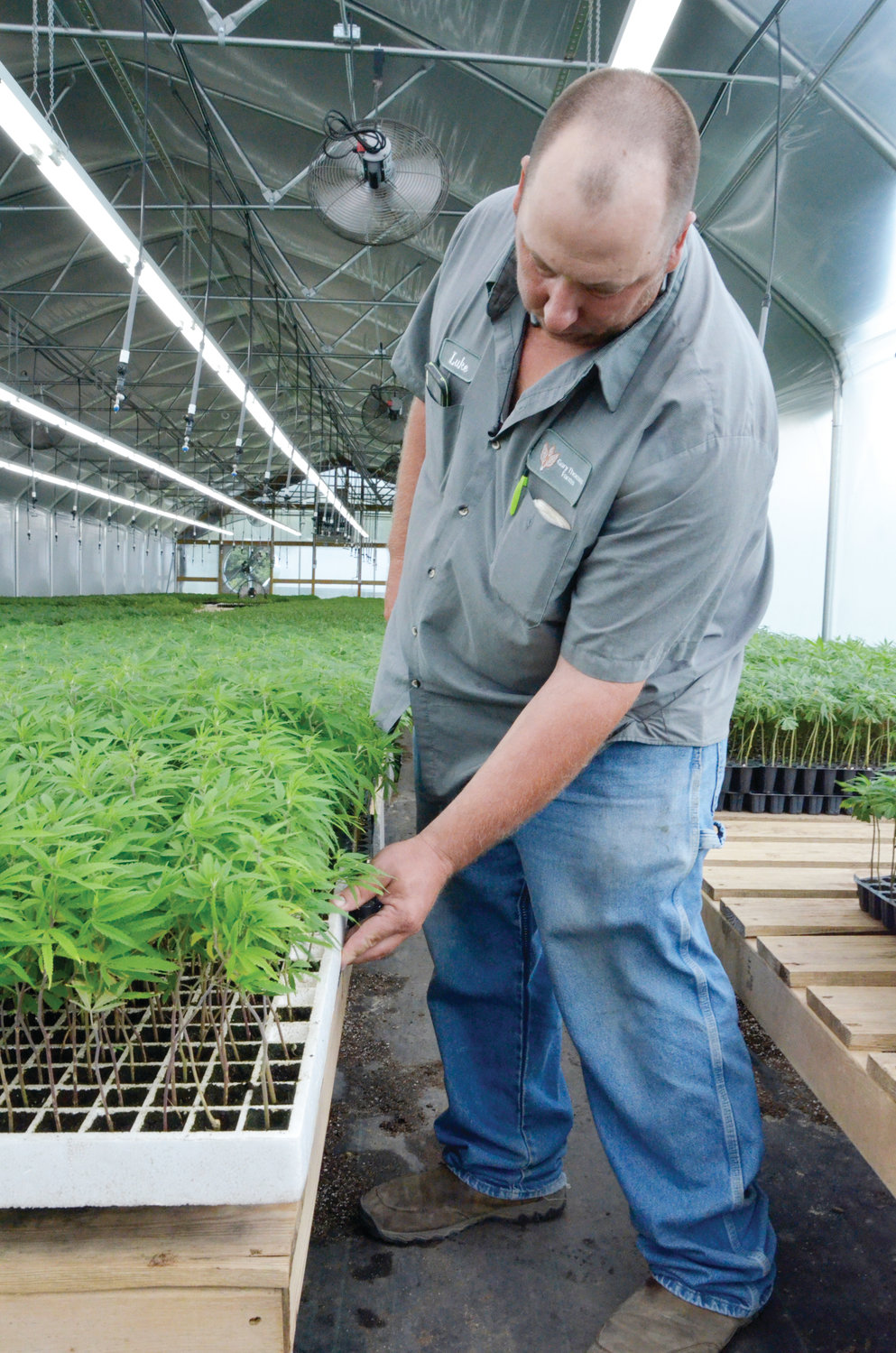 Luke Thomas of the Gary Thomas Farms cultivates industrial hemp clones to expand their own production as well as sell to other hemp farmers.