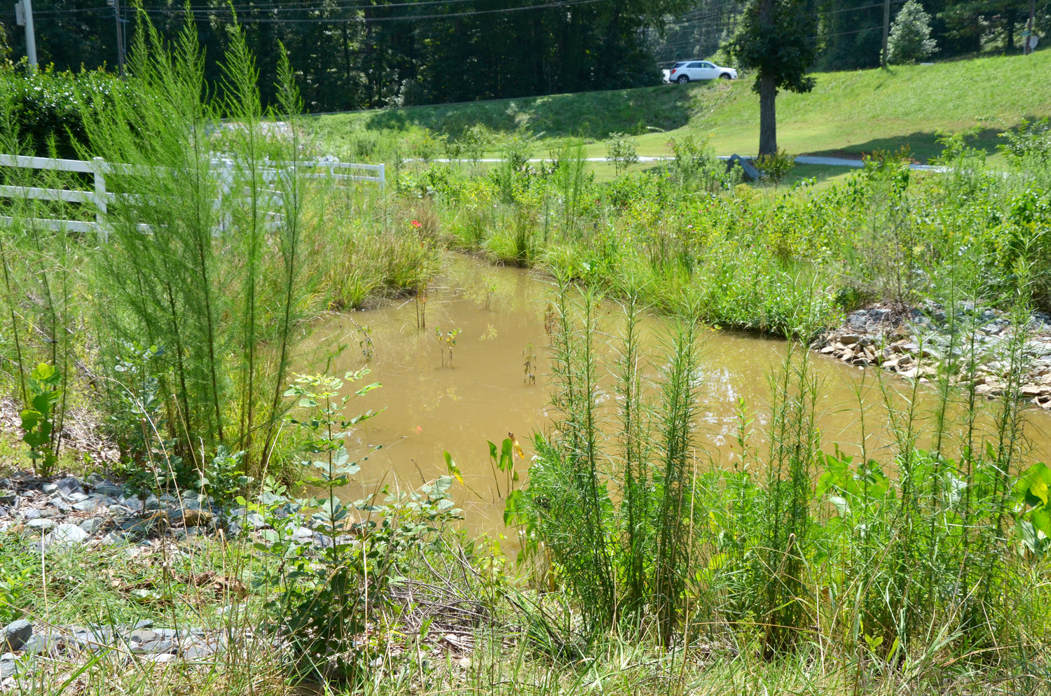 The wetlands and riparian buffer at Boling Lane Park were constructed to slow flooding, to help clean and filter the storm runoff and to create a habitat for dragonflies that reduce mosquito populations..