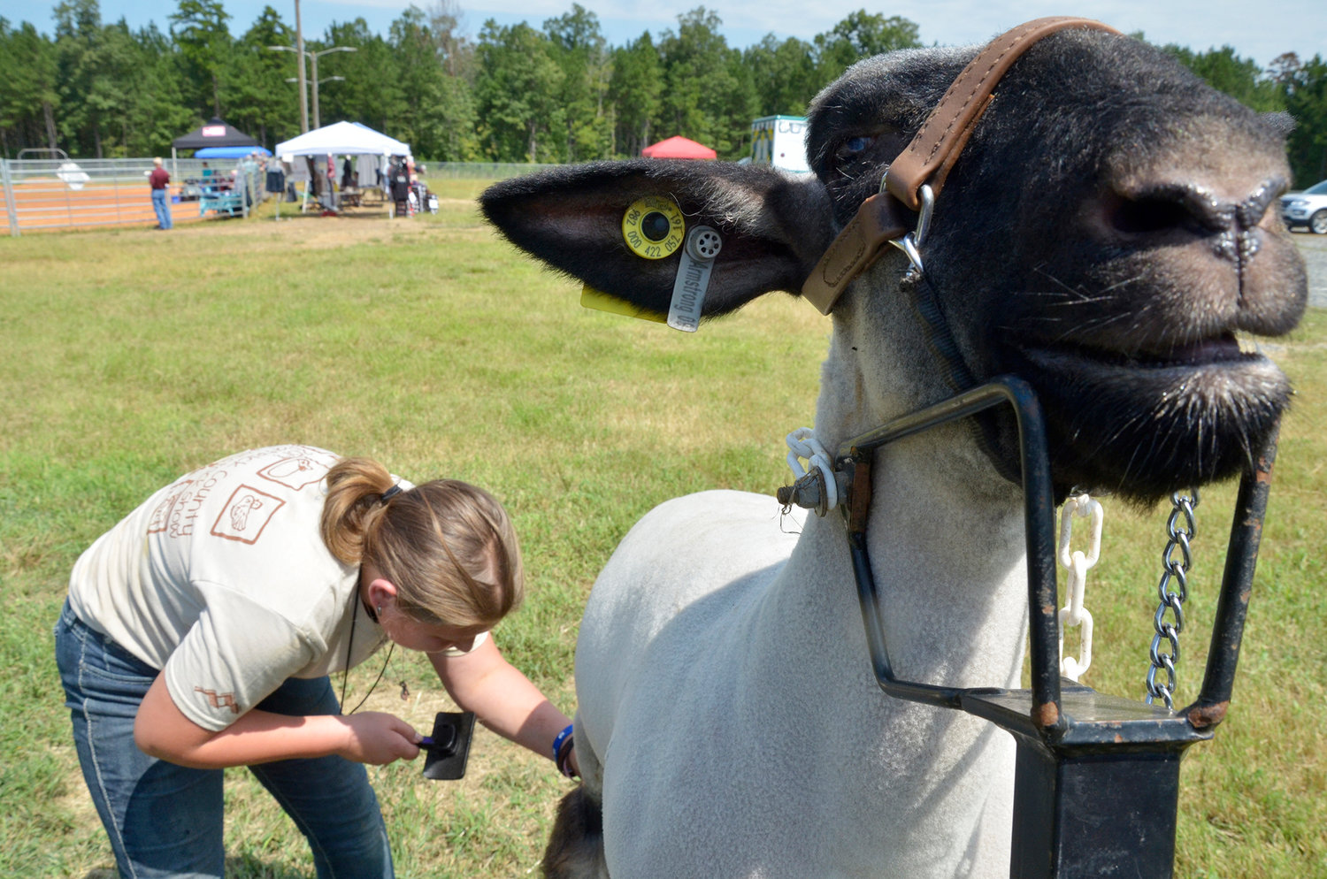 Last minute detailing