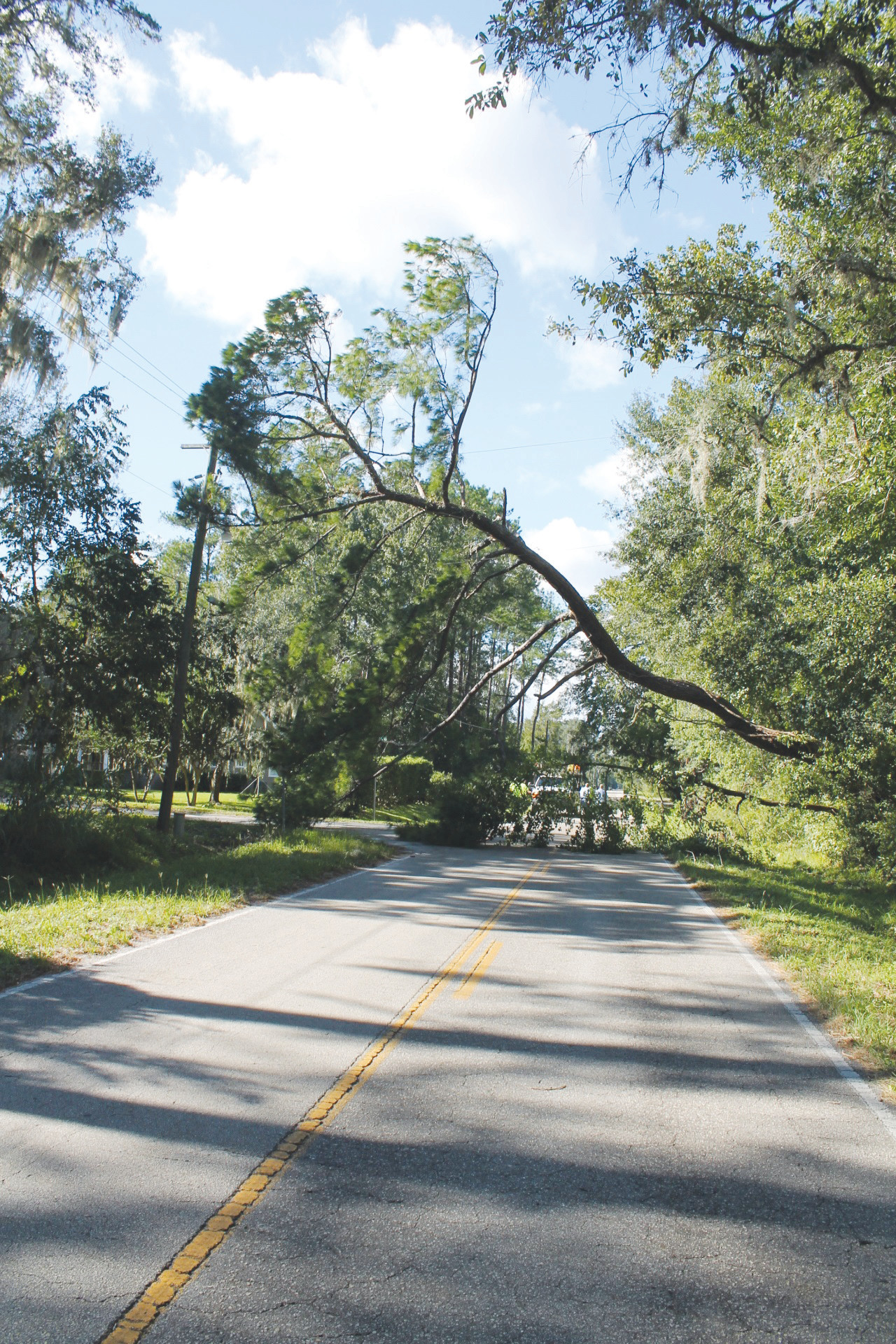 Here's a shot of a downed tree near Mahama Bluff Road and County Road 209 just north of Green Cove Springs.