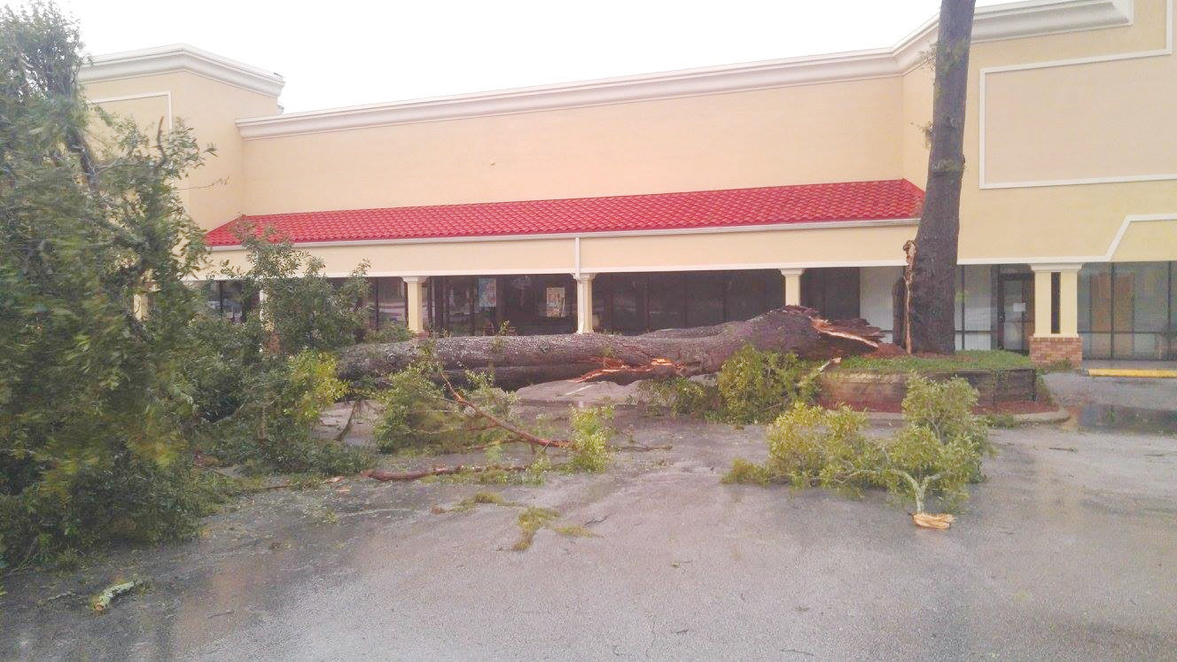 Often it's how much water a tree soaks up in a storm that leads to its demise. Such was the case here in this shopping center on Park Avenue in Orange Park.