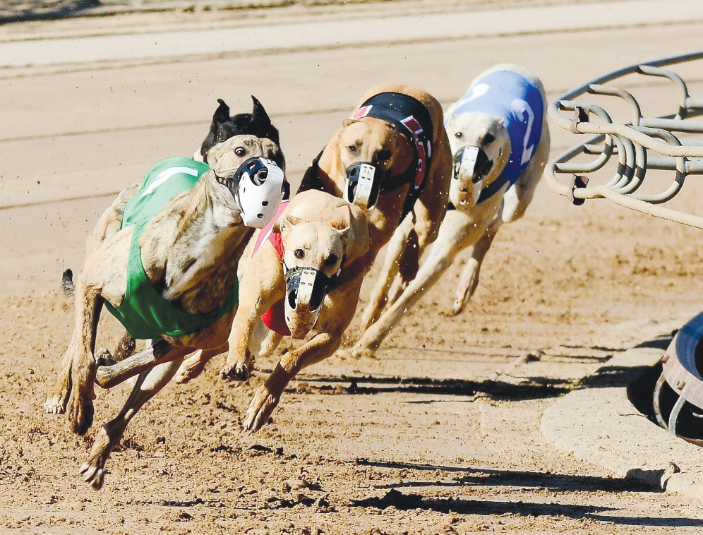 Twelve greyhounds that race at bestbet of Orange Park's track tested positive for a cocaine metabolite 17 times.