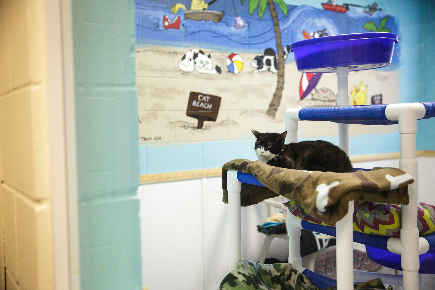 Only two cats are currently living at SAFE Animal Shelter as they rebuild their facility after Hurricane Irma. The shelter was inundated with knee-deep water and has made a quick recovery with their sights set on early December for a reopening celebration.