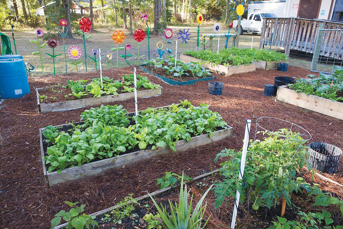 The base of any successful vegetable garden is the soil. Source: UF/IFAS