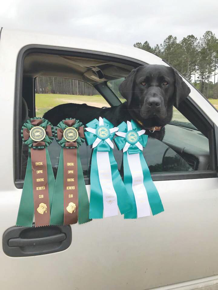 "Maximus Aurelis ""Max"" Davis shows off his four ribbons after earning his first hunting test title with four perfect scores in two days of action in Hilliard and in Twin Lakes, Ga."