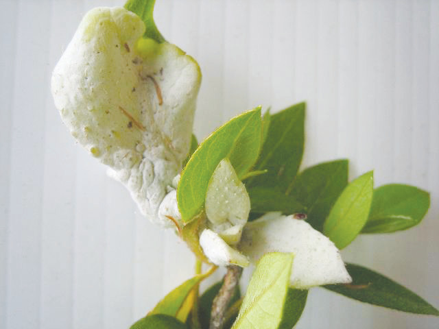 Source: UF/IFAS