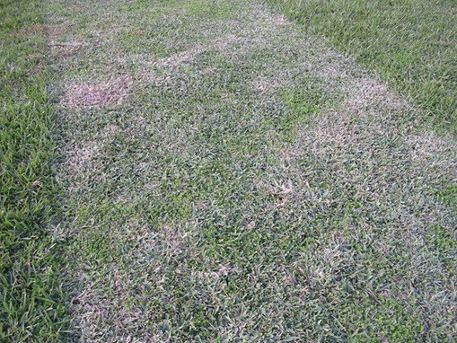 Cutting your turfgrass can cause scalping, which leads to many issues.