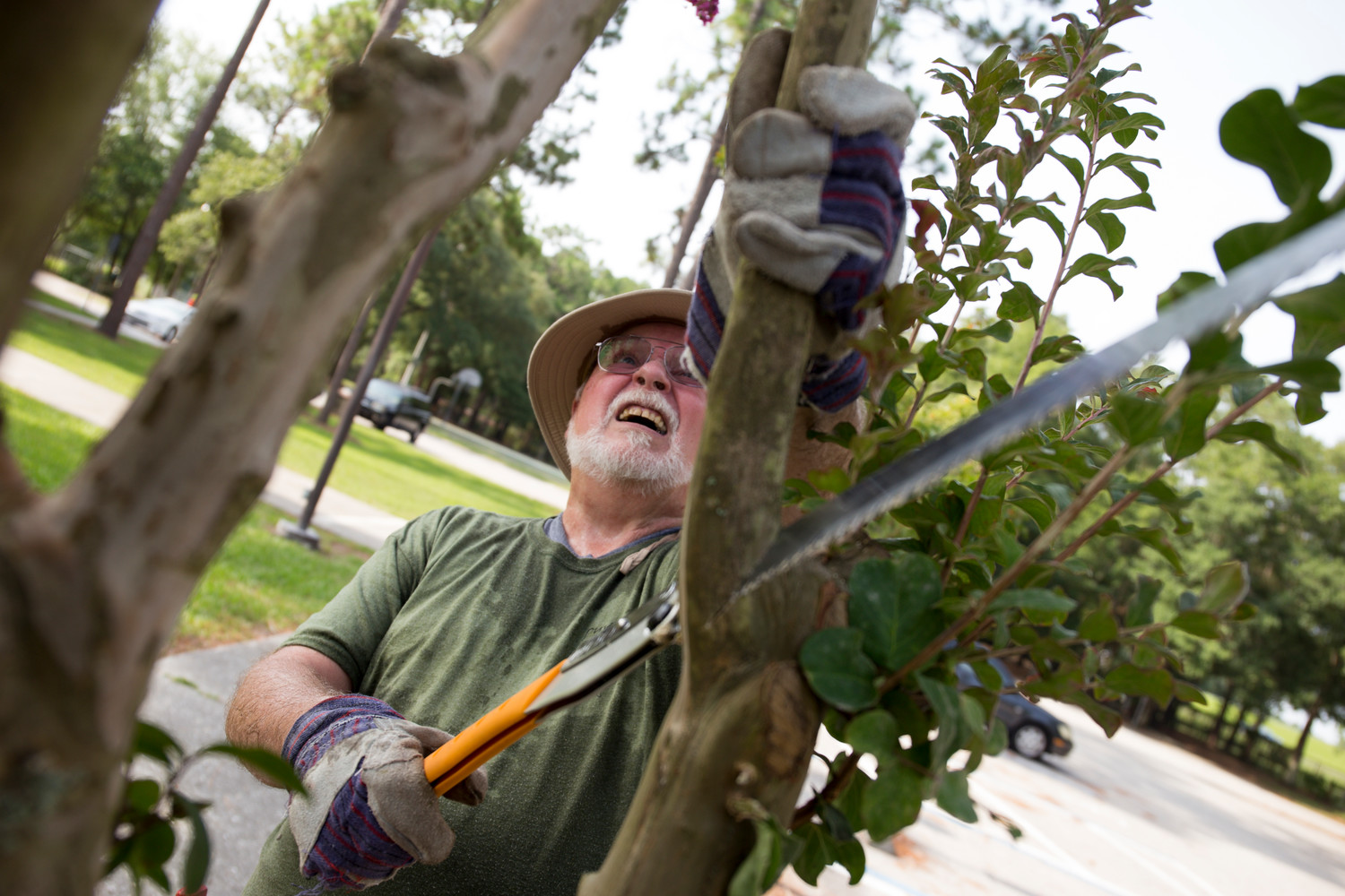 A volunteer of the Duval County Tree Stewards trims a tree limb at a park near Jacksonville, Florida.