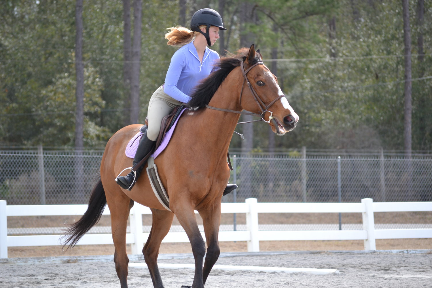 Here, rider Sarah Grimm dons a helmet in the 4-H Winter Wonderland of Horses event, where she is stop the horse Sea Cloud, also known as Cloudy.
