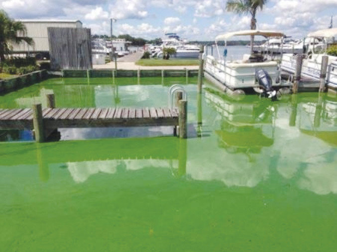 Florida Department of Environmental Protection detected six algae blooms near Doctors Lake and two at Black Creek and Shands Bridge.