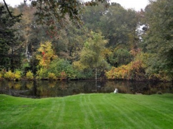 The stunning back yard includes a plethora of trees, green grass and a private pond.