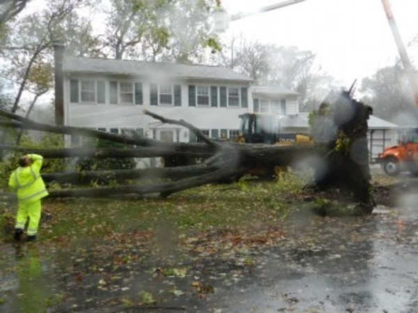 Hurricane Sandy brought down trees around town, including this one on Terrace Avenue.