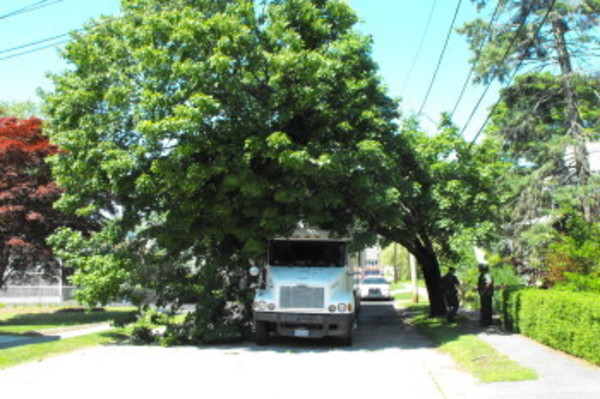 A tree limb sits lodged between a truck and its trailer on Garfield Street.