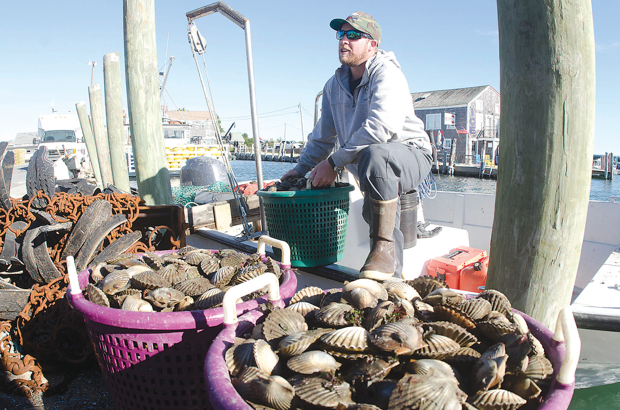 Alex Brewster of Westport unloads a morning's worth of scallops Friday morning. Best scalloping he's ever seen, he said.