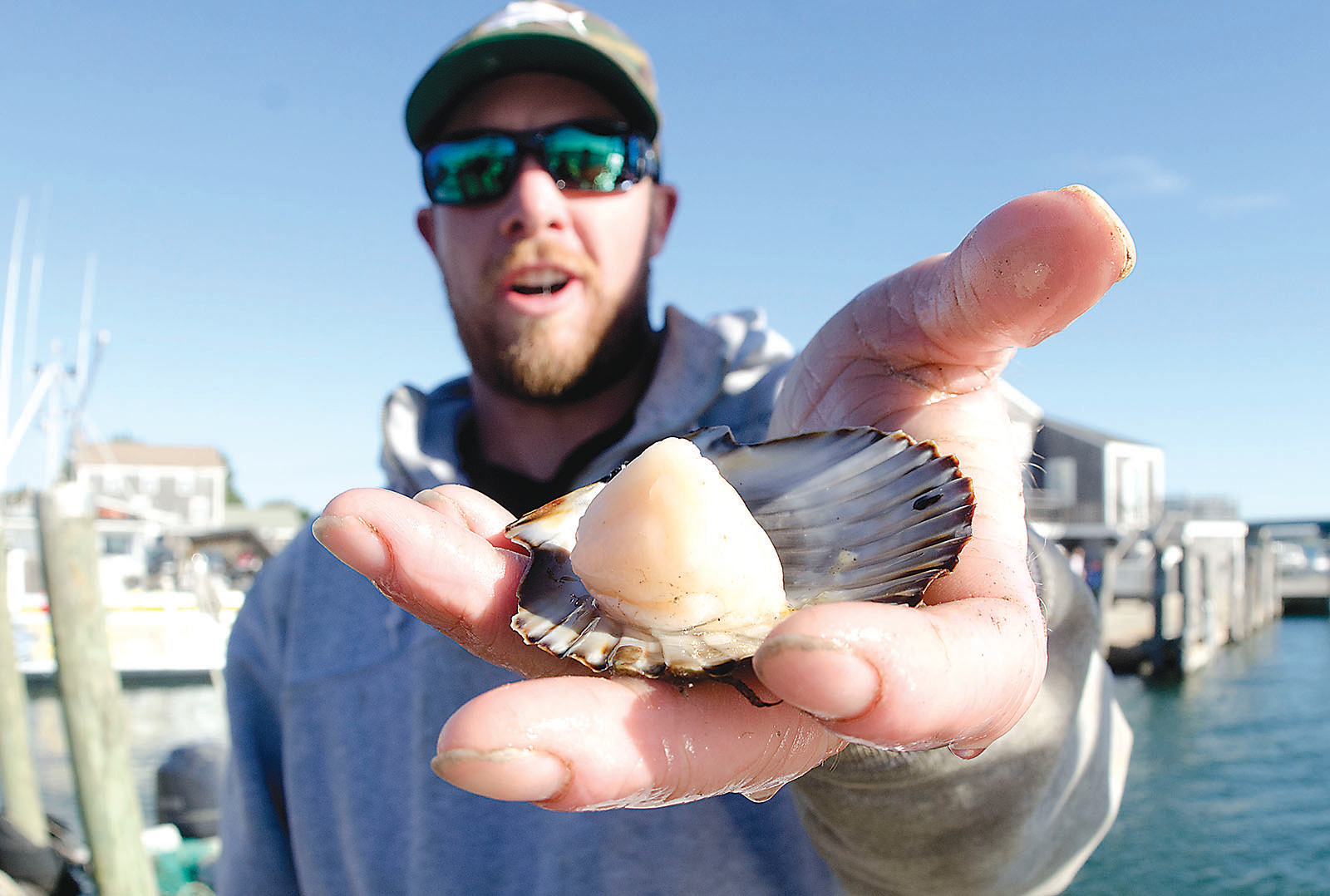 Alex Brewster holds an opened scallop to display the outstanding size of the meat within.