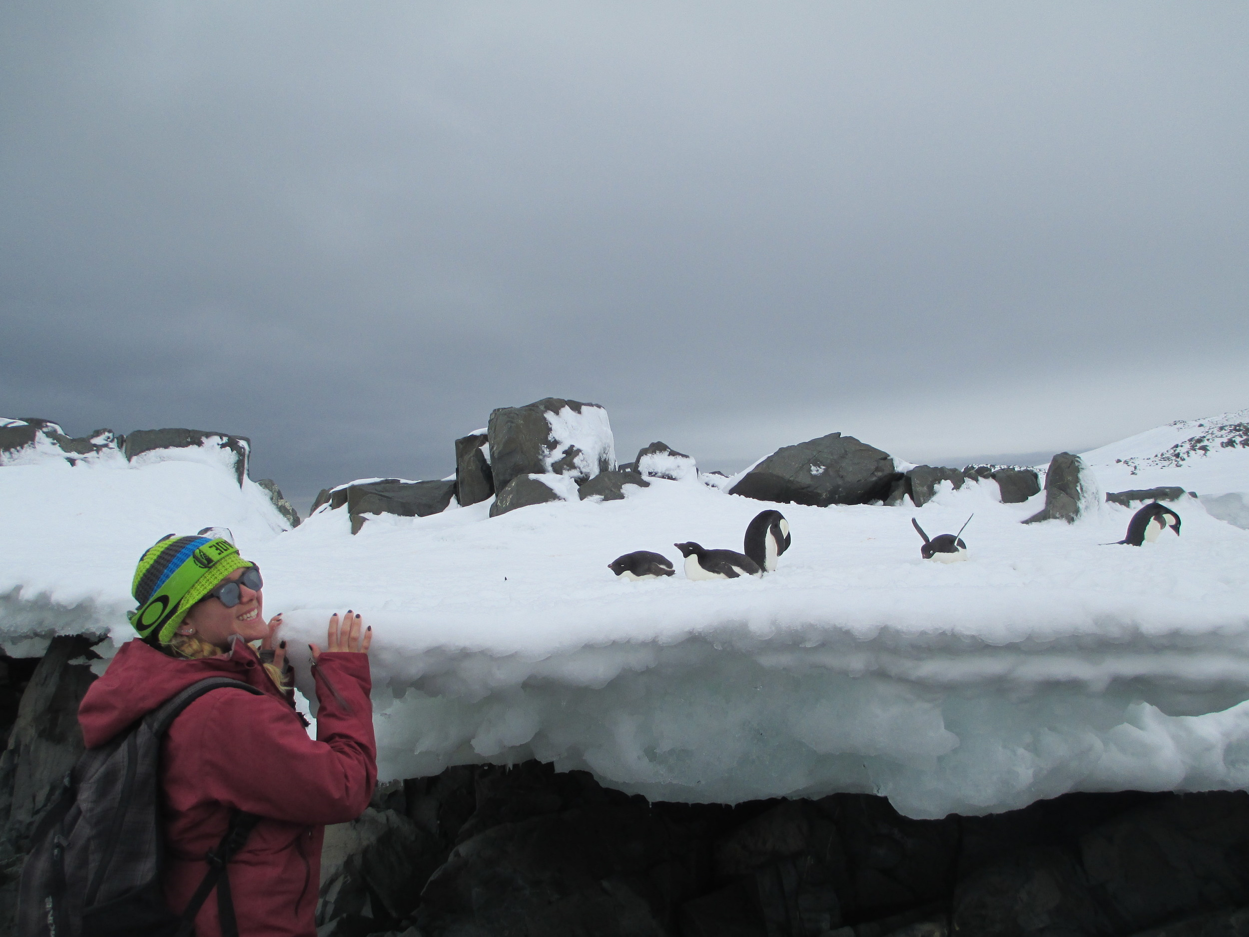 Breezy Grenier mingles with the penguins at Hope Bay in the Antarctic Peninsula in 2013.