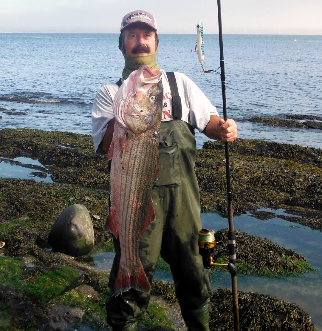 Aquidneck Island shore angler John Migliori with a 40 inch striped bass he caught earlier this week using a top water lure.