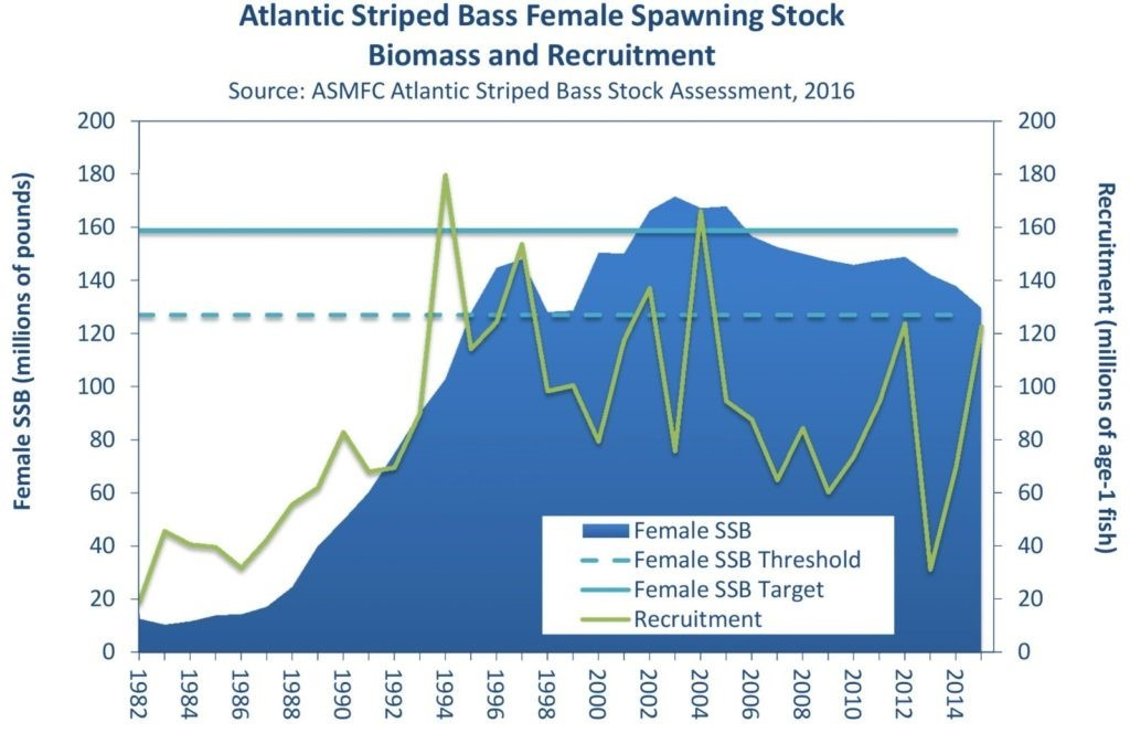Striped bass taking a dive: Striped bass are overfished with overfishing occurring… the stock is in decline.