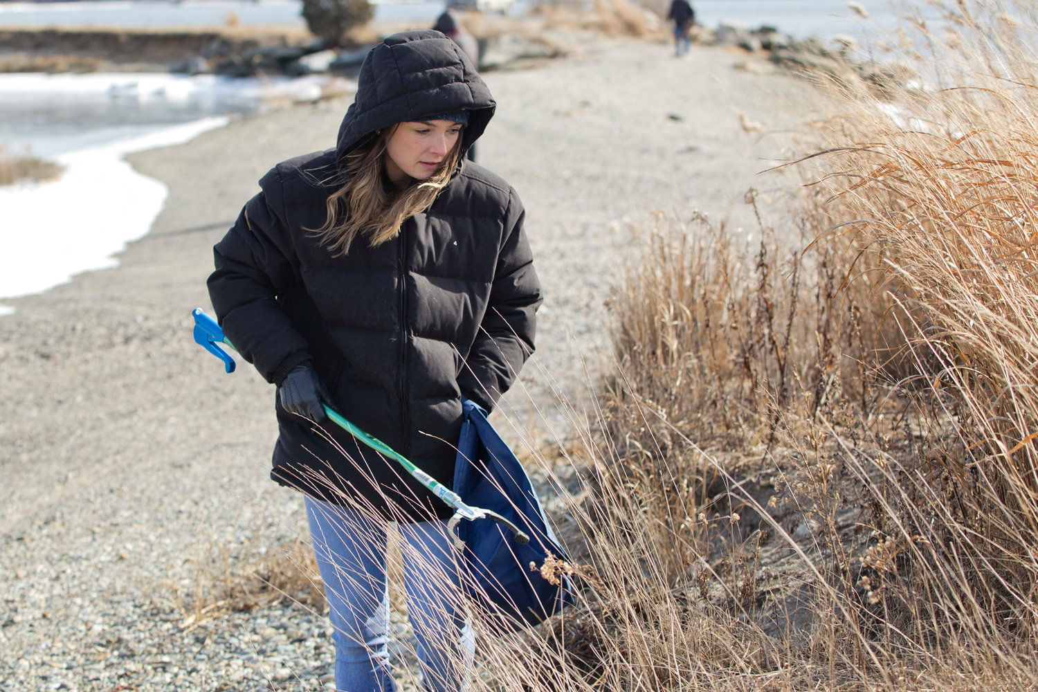 A volunteer combs the grass in search of trash at Gull Cove.