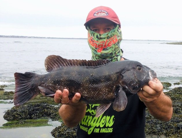 "Angler John Migliori with a 22"" tautog he caught off Ocean Drive, Newport last weekend."