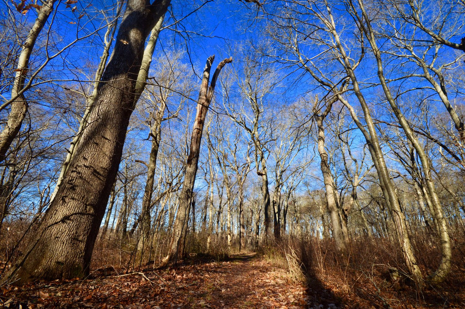 Oakland Forest & Meadow Preserve is located off Carriage Drive in Portsmouth.