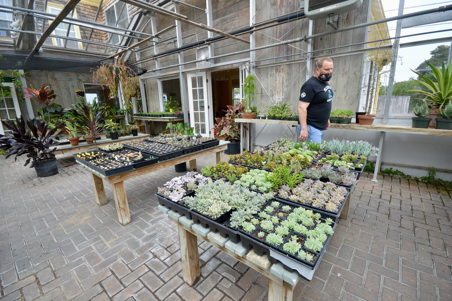 Matt Gray in Ragged Island's greenhouse that holds hundreds of succulent plants that will be available for sale once the farm brewery opens.