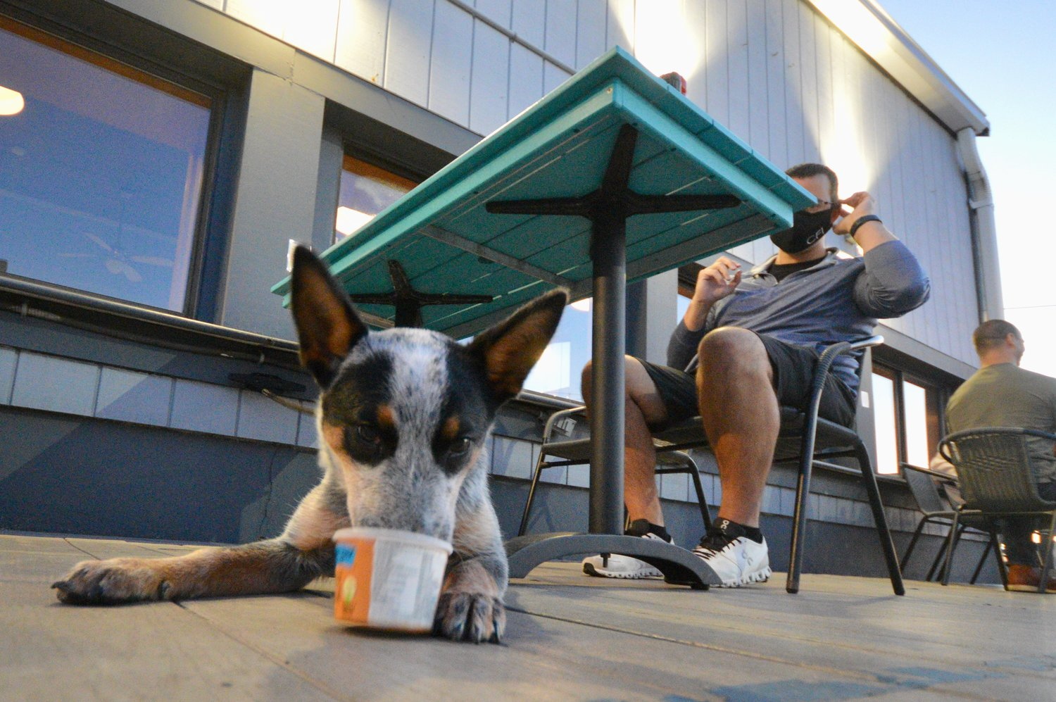 "Indie, a 5-month-old Australian cattle dog, enjoys an ice cream ""pup cup"" at the Gulf Stream Bar & Grille in Portsmouth Friday night. She was there with her owners, Nicole Frisk and Dan Corrigan."
