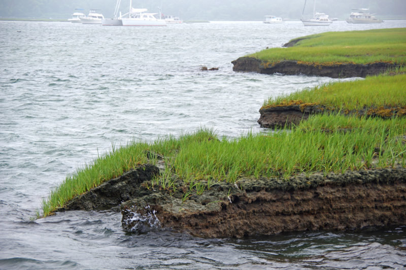 Large sections of Westport salt marshes are collapsing and researchers say nitrogen overload deserves most of the blame. (Buzzards Bay Coalition)