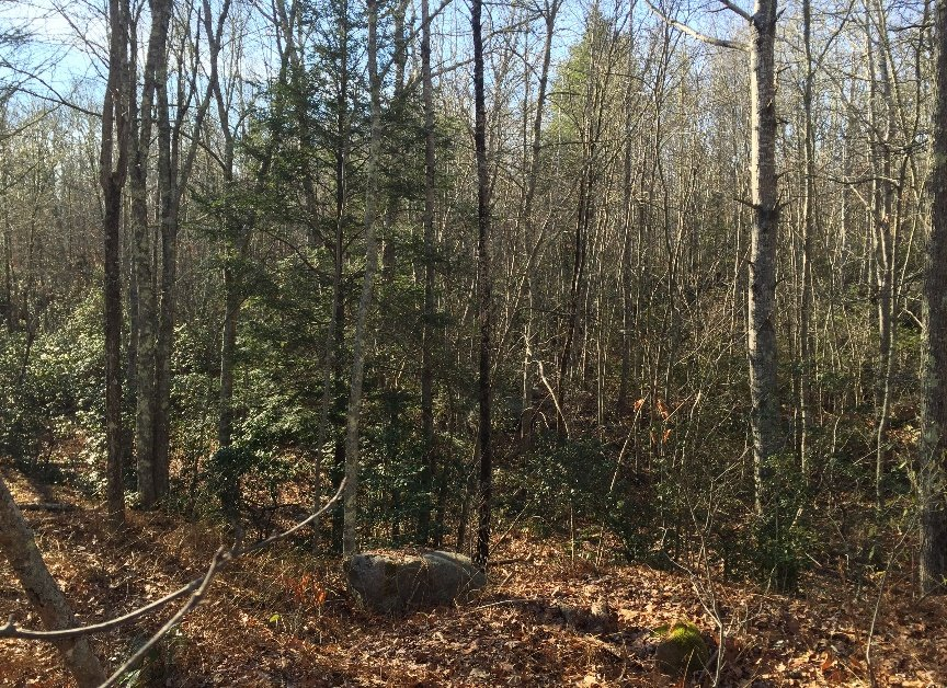 A view within the heavily wooded open tract in Tiverton. (RI DEM photo)