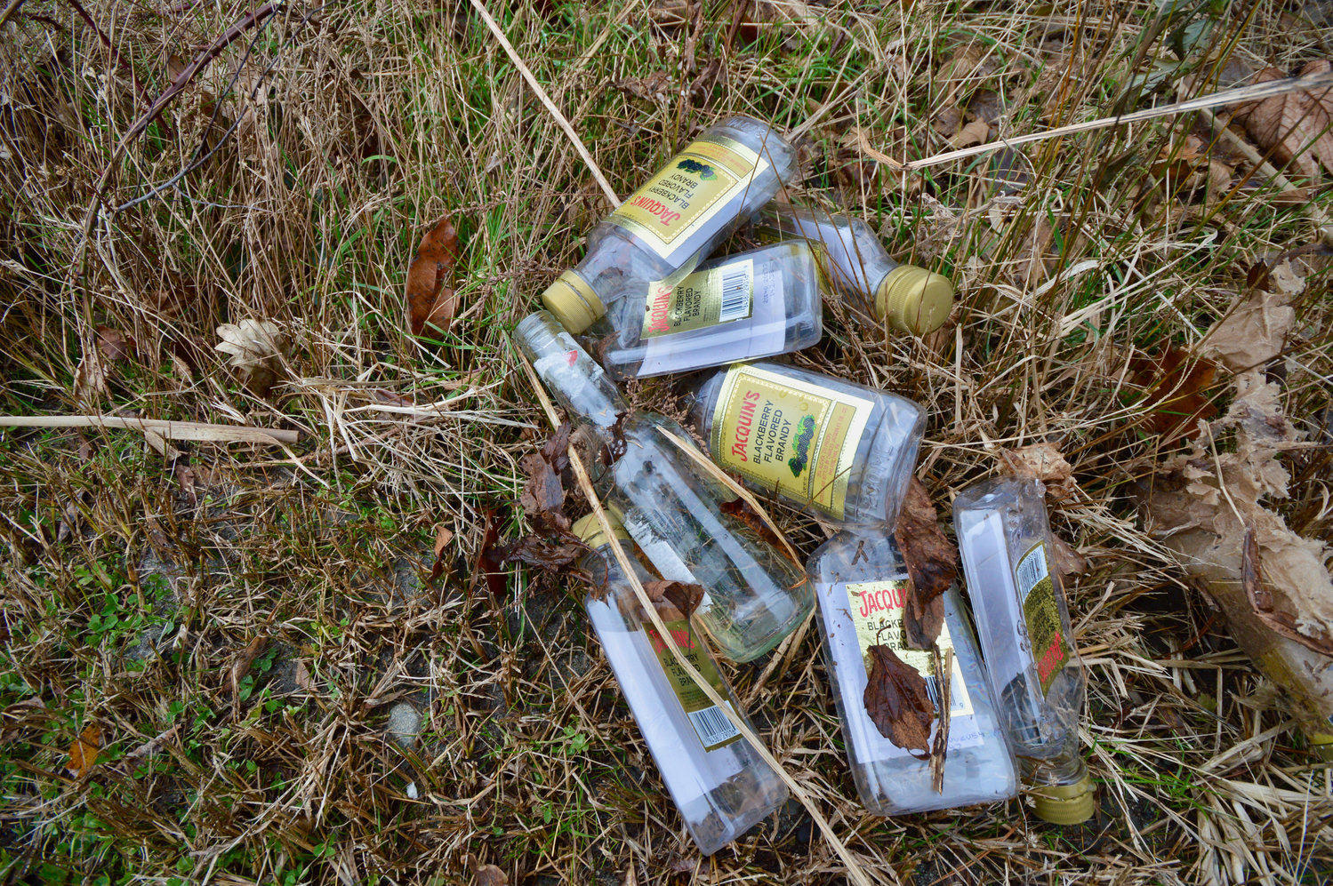 A small sampling of bottles of liquor Ms. Haga quickly found discarded behind a thicket of brush near the upper pond at Melville.