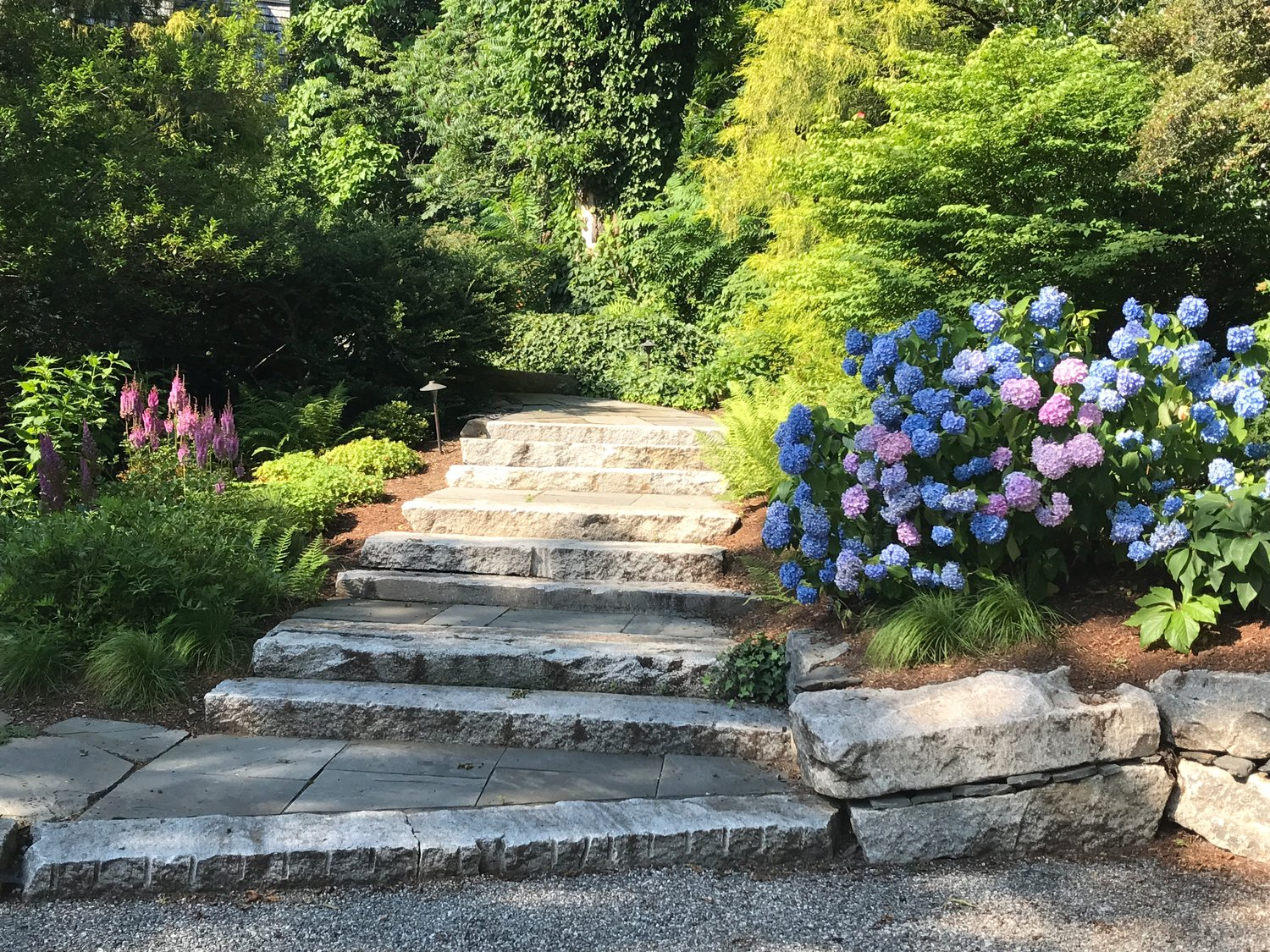 These stairs, fashioned from reclaimed granite, are set into the slope with lush plantings on both sides. This space is on the north side of the property, so plants that like shade were chosen for this area, including the bold and traditional New England hydrangea at the entrance.