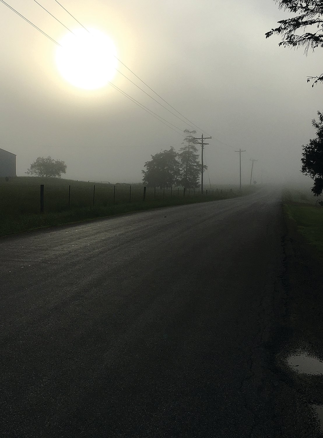 Just a few miles a way from the cows in the field, fog gives the sun an eerie glow at the intersection of West Council Hill Road and Ill. 84.