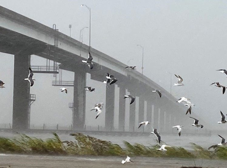 A flock of birds flies against the winds from Hurricane Sally in Apalachicola