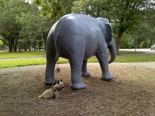 Fanny the Elephant taking Stitch the Dog for a walk.