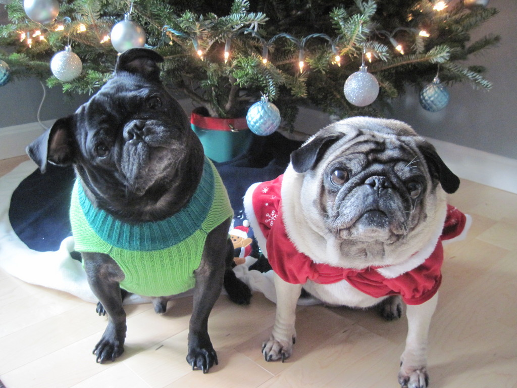 Bibi & Coco in their Christmas outfits