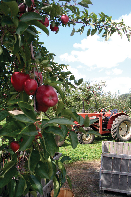READY TO ROLL: There is a huge selection of apples at Sunset Orchards, where the Polseno family grows 25 varieties.