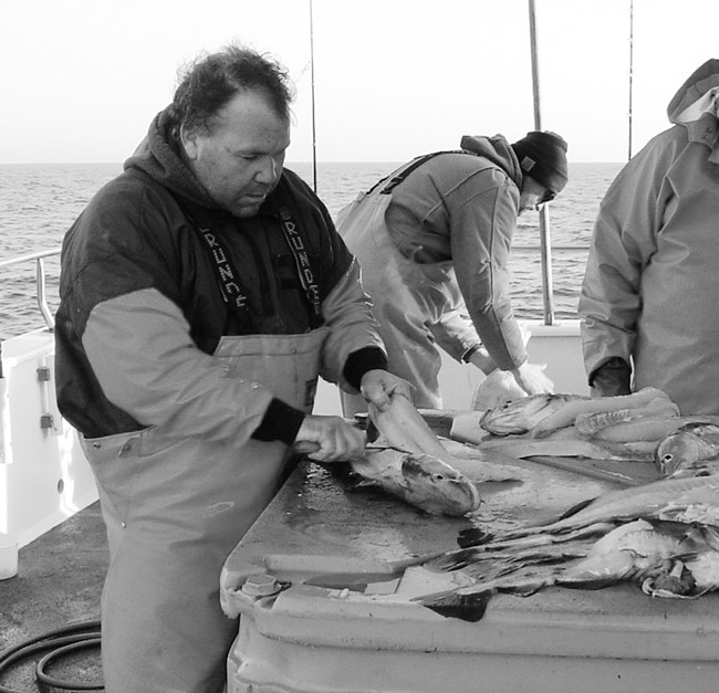 What a difference a year makes… Francis Fleet mate Ted Mcdermott fillets cod fish for passengers on a January 1, 2011 cod fishing trip.  This year (1/1/2012) we have a new cod fillet law in place.