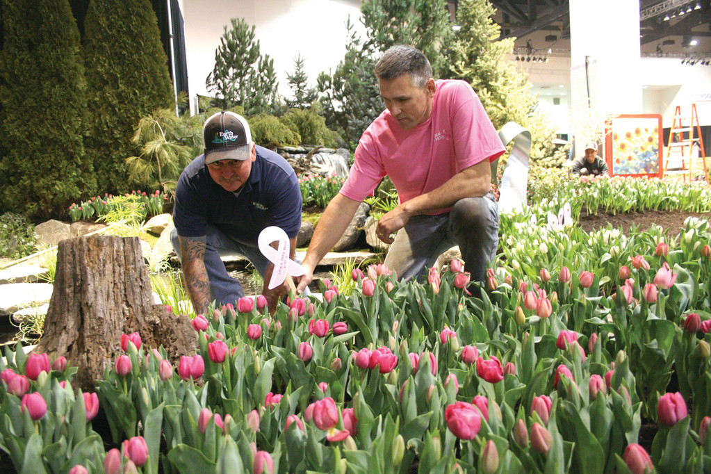 PLANTING RIBBONS: Joe Mack (left) and Craig Marciniak put finishing touches to the Garden of Hope that features 1,300 blooming pink and white tulips, two waterfalls and the pink ribbons bearing the names of breast cancer survivors.