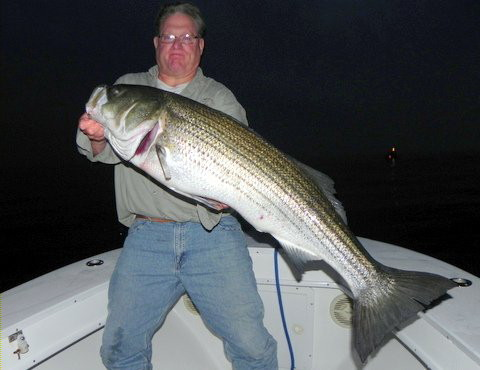 Captain John Sheriff with the 43 pound bass he caught on the Southwest Ledge of Block Island fishing at night with eels.