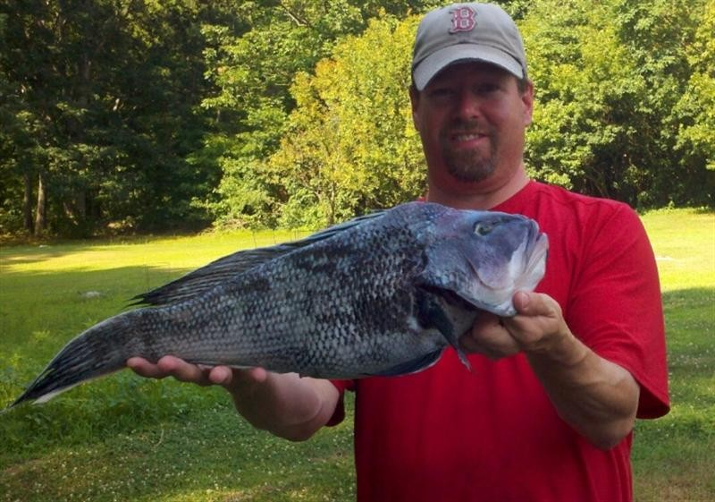 Angler Joe Fournier with a large black sea bass he caught under the Newport Bridge last week.