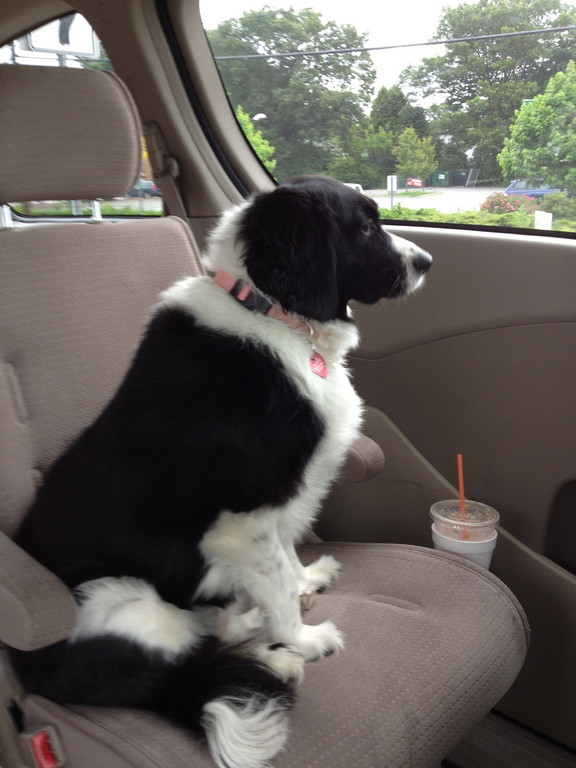 """Nothing like a car ride to Dunkin to start my day."""