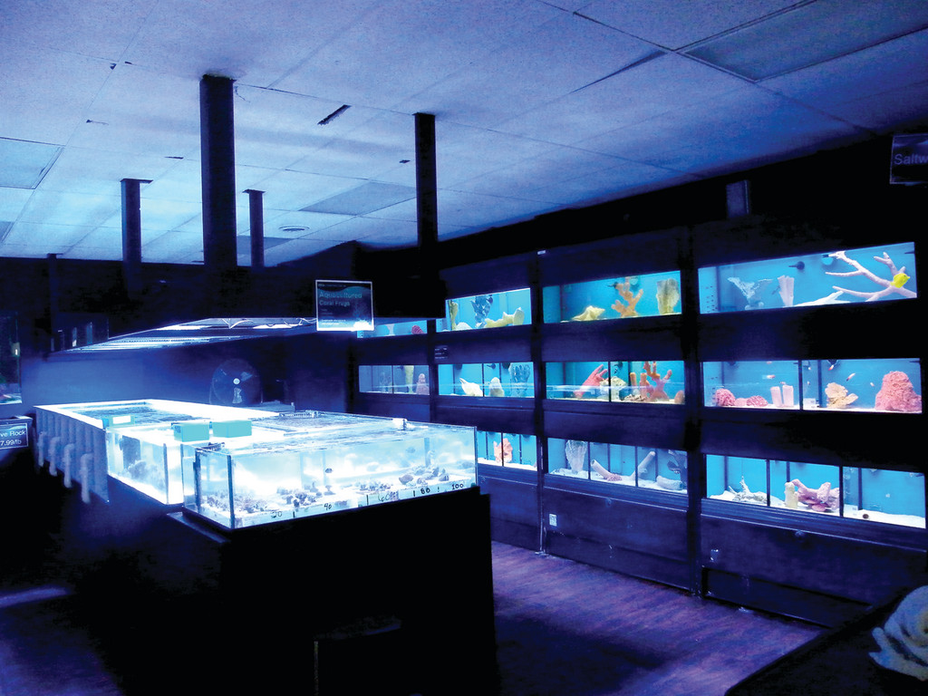 BLUE WATERS: The back room at Something Fishy houses fresh and salt water fish, as well as live corals.