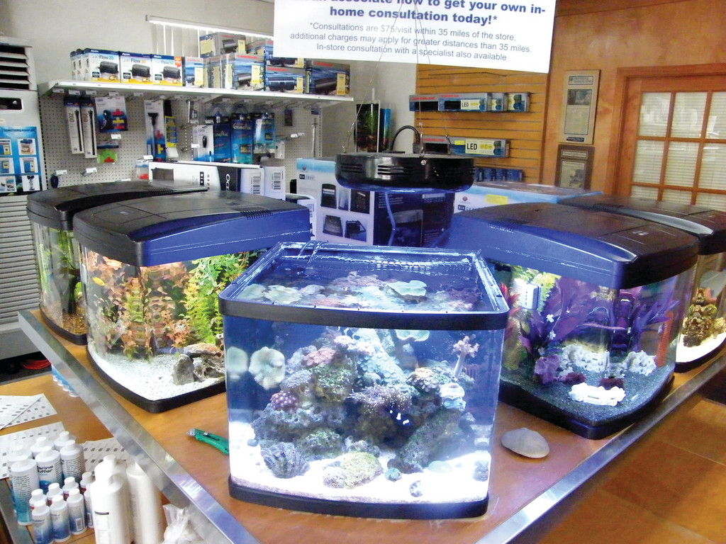 FOR THE HOME: In addition to their custom-built tanks, Something Fishy sells aquariums for everyday consumers, too. They're open seven days a week for retail business.