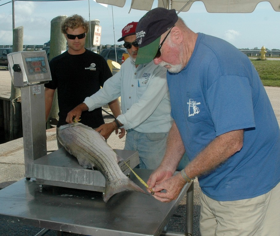 Measuring up: This 28 lbs. striped bass caught by Andrew Raucci (left) of Wakefield gets weighed in and measured by Ed Carney, RISAA board member (right), at the Galilee Fishing for a Cause Tournament and Food Festival.